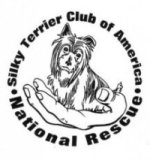 silky terrier club of america rescue program